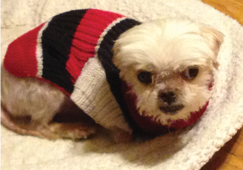 dog in a simple knit sweater